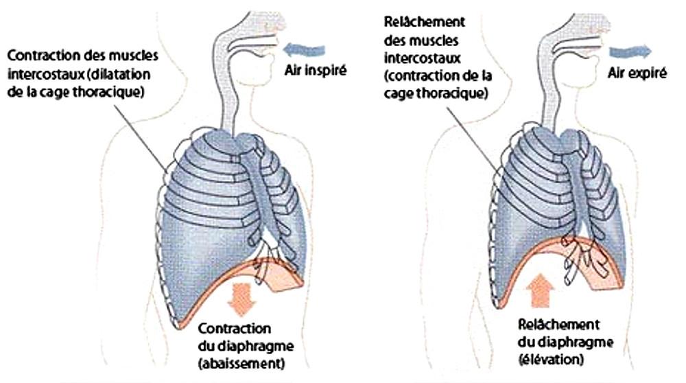TECHNIQUE - OSTEOPATHIE - CORPS EN MAIN