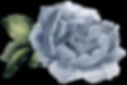 CollectifdelaCite_fleur-sans-fond-blanc.