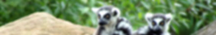 Img_2880x480px-Madagascar.jpg