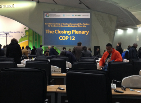 Highlights of COP-12