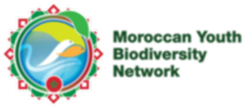 GYBN_Morocco_Logo_Horizontal_Low.png