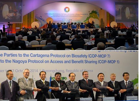 CBD COP-12 Kicks Off