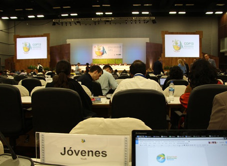 Tracking policy negotiations at COP-13: A quick rundown