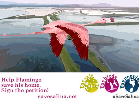 Flamingos at risk! Sign the Petition #SaveSalina