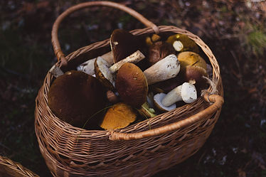 food-mushrooms-nature-74510.jpg