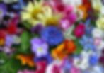 edible_flowers-1_ps_high80.jpg