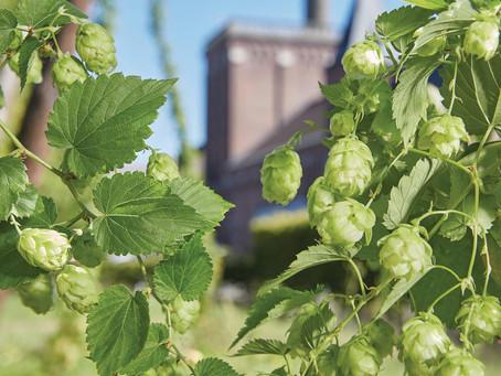 Pirmąjį rugpjūčio ketvirtadienį aludariai mini IPA dieną (angl. Indian Pale Ale). Blog'as.