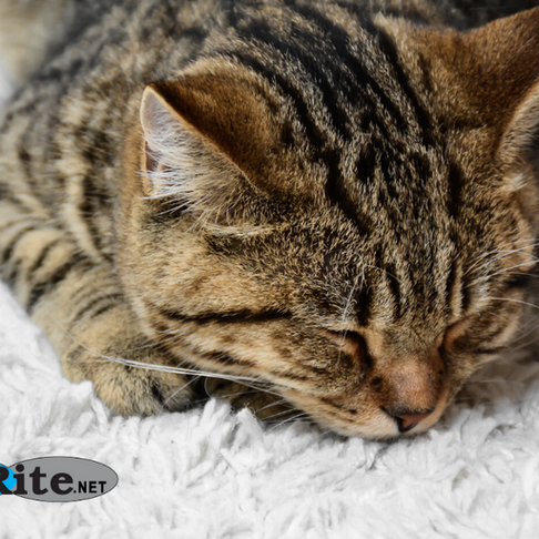 Why Pet Owners Should Consider a Professional Carpet Cleaning