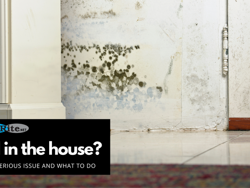 Mold in the house? Why it's a serious issue and what to do.