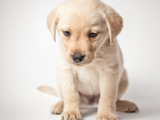 What Is In The Big Deal About. . . Pet Urine?