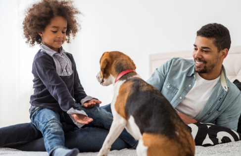 How to Reduce Odors in a Home with Pets