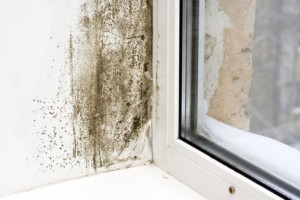 What to Expect From Our Mold Inspection Service