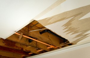 What is the True Cost of Mold Damage?