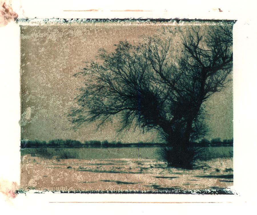 L'arbre neige