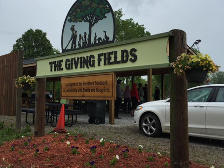 4EG Volunteers with The Giving Fields
