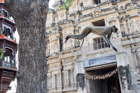 Tony-Prince-Travel-India-09.jpg