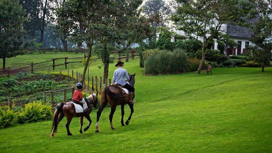 The Manor at Ngorongoro Garden