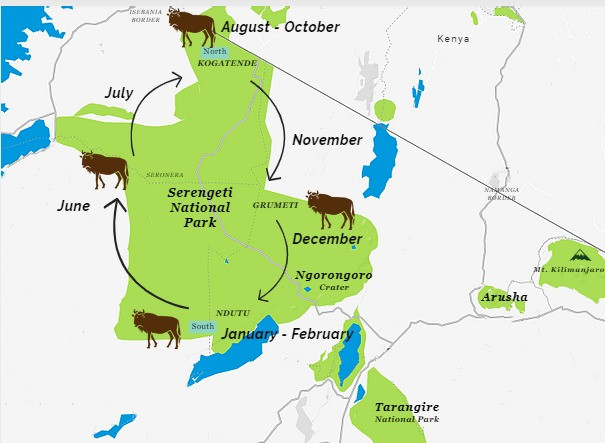 Wildebeest Migration Chart