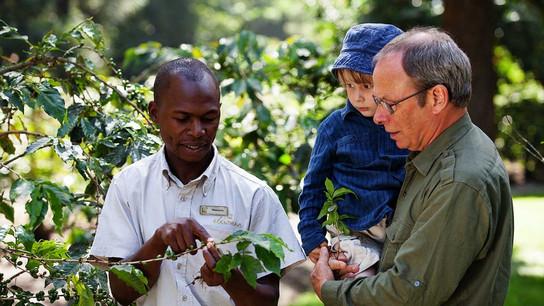 Arusha Coffee Lodge Coffee Tour