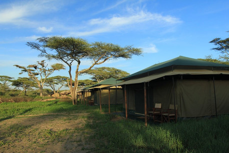 Acacia Migration Camp Tent Outside