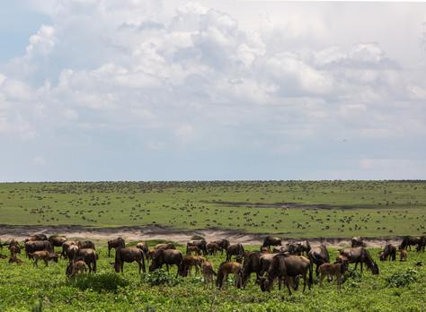 Tanzania Travel and Safari Guide