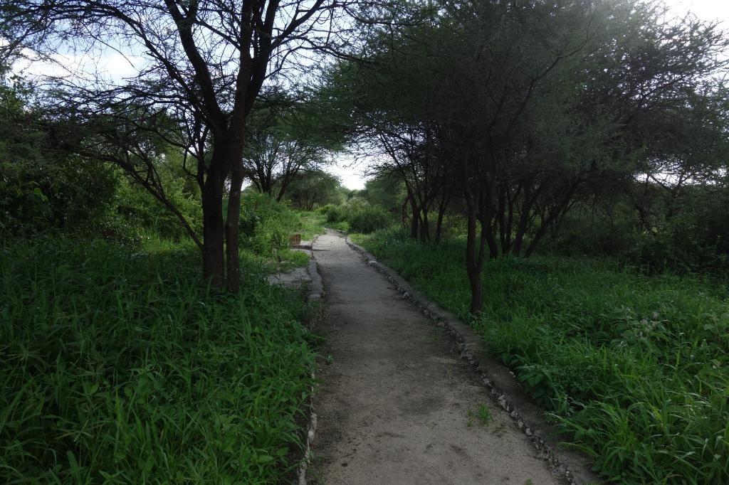 Tarangire Osupuko Lodge Outsdide View