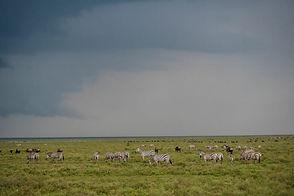 3 days Serengeti.jpeg