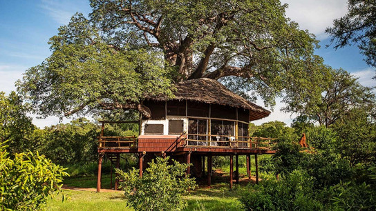 Elewana Treetrops Tarangire Exterior