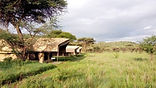 Serengeti Osupuko.jpg