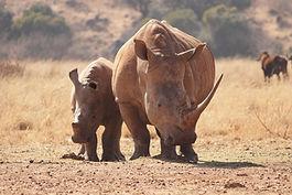 3D Rhino (1).jpg
