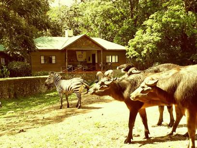Mount Meru Game Lodge Sanctuary