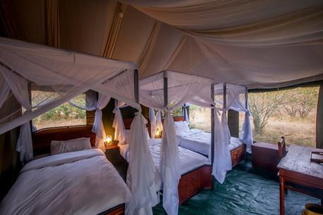 Acacia Migration Camp Inside Tent