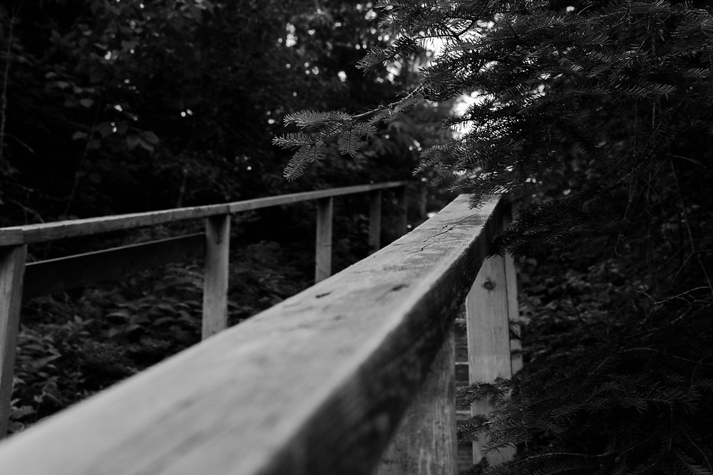 Bridge or fence extending into a forest. Photo by Dawson Lovell