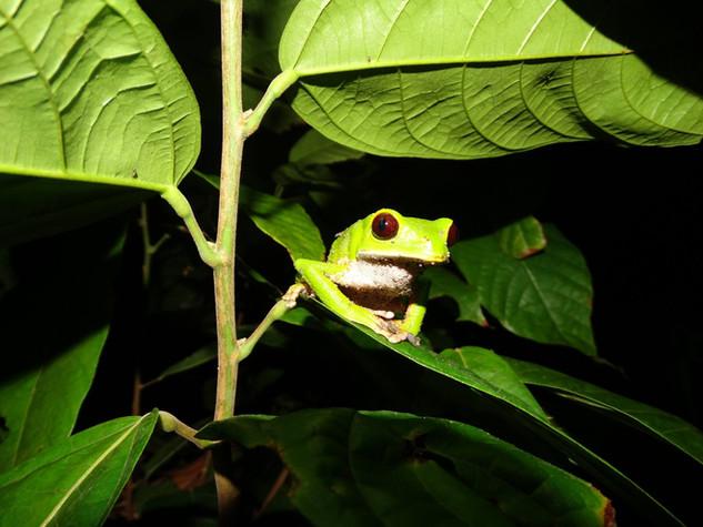 obyvatelka peruánské džugle