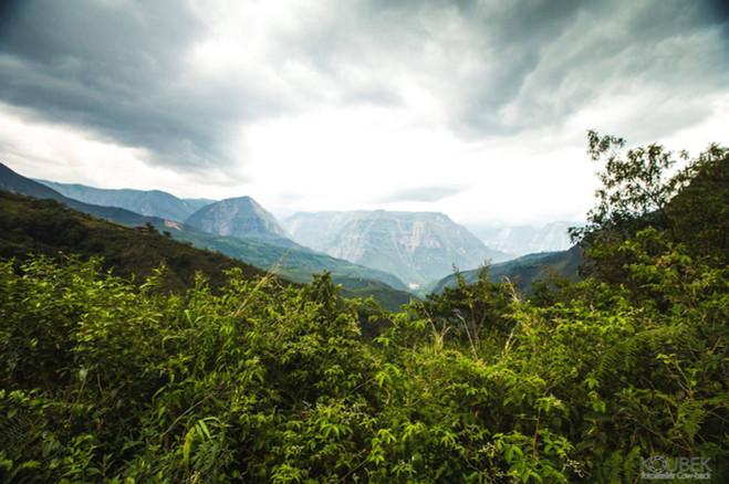 andská horská džungle