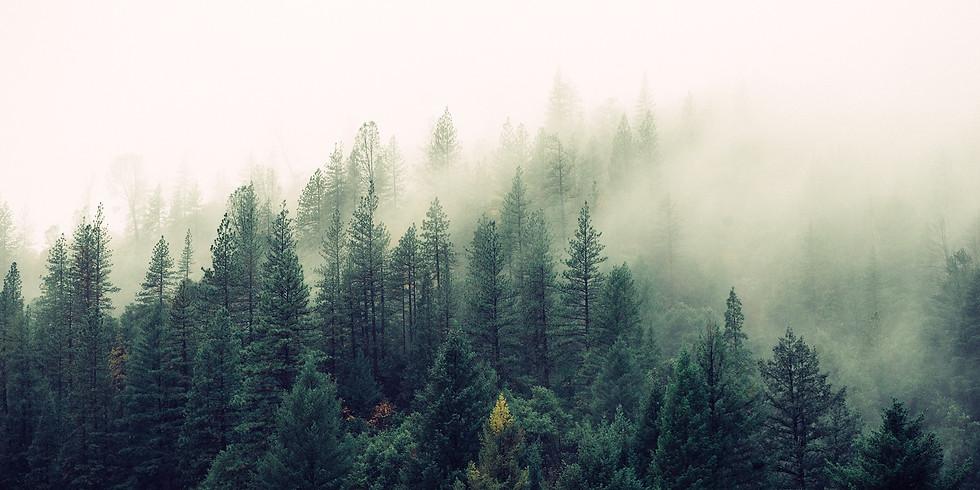 Šumava, Srní - pobyt zaměřený na léčení, hojnost a vztahy
