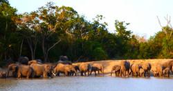 Safari at Saadani park (1h30 driving)