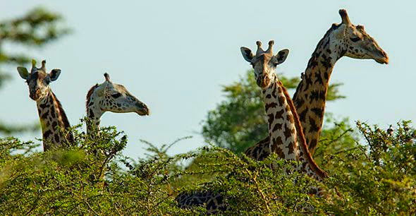 Enjoy full day safari in Saadani