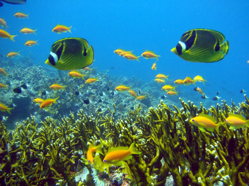 Corals Maziwe island