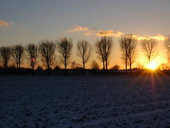 Sonnenuntergang über der Allee