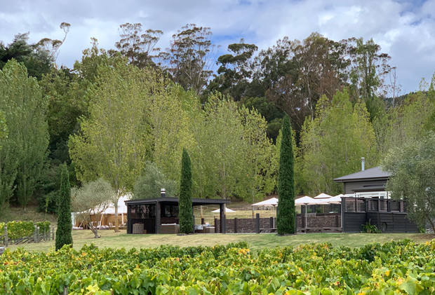Vines and cypress trees