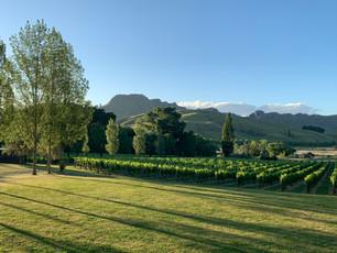 Marquee lawn dappled in evening sun