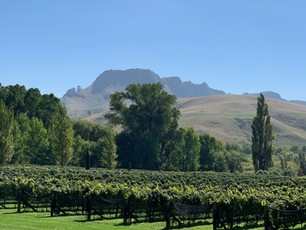 Te Mata Peak & vines from marquee lawn