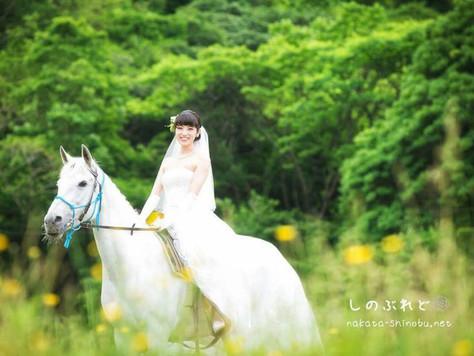 愛馬が白馬になった頃