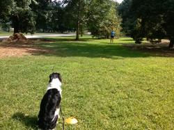 Dog Park Sanford Fl