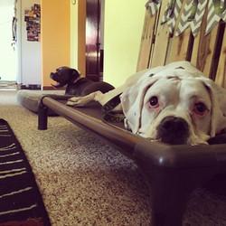 Dog Training Sanford, FL