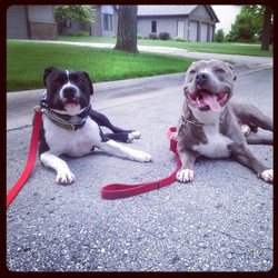 Instagram - During our first walk this morning an onlooker mentioned that these two make a beautiful