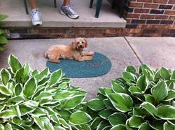 Small Dog Leash Aggression