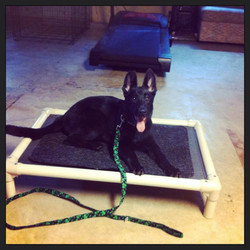General Obedience Training Green Bay