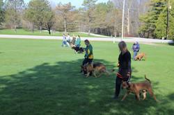 Green Bay Dog Class